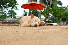 Lazy dog relaxing and sleeping Royalty Free Stock Images
