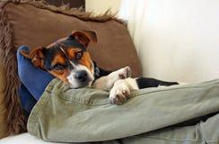 Lazy dog. A dog resting at his boss feet Royalty Free Stock Photo