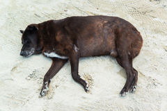 Lazy dog sleep on sand beach Royalty Free Stock Photo