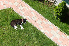 Lazy dog sleeping on lawn yard near alley. This lazy black dog is sleeping on lawn in the yard near brick alley royalty free stock images