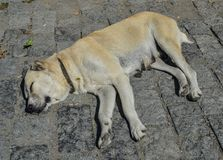 A lazy dog sleeping on street stock photography