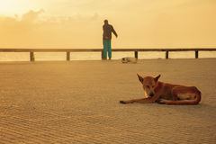 Lazy dogs relaxing and sleeping while somebody was exercise near the beach in morning Stock Photos