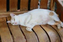 Lazy fat cat Stock Photography