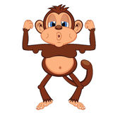 Lazy and fat monkey Royalty Free Stock Images