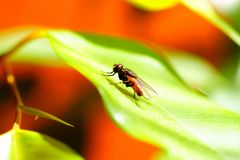 Lazy fly on leaf Royalty Free Stock Photos