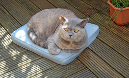 Lazy garden cat on cushion Royalty Free Stock Image