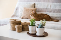 Lazy ginger cat laying on a sofa Royalty Free Stock Photos