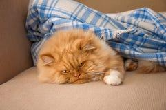 Lazy ginger cat Stock Image