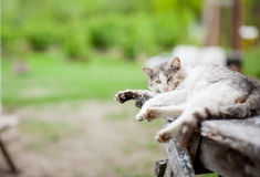 Lazy gray cat Stock Images