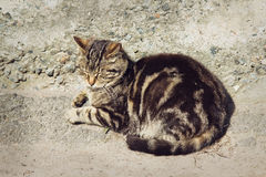 Lazy gray striped cat is sleeping outdoors Stock Photos