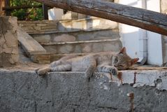 LAZY GREY CAT LYING ON THE PIECE OF STONE Royalty Free Stock Images