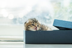 Lazy kitten in box Stock Photos
