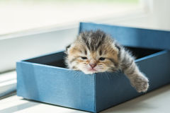 Lazy kitten in box Royalty Free Stock Photography