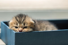 Lazy kitten in box Stock Images