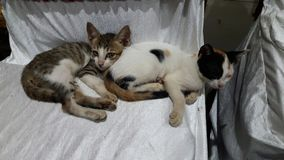 Two cute kittens lying on chair stock photo
