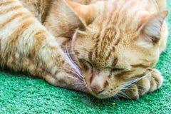 Lazy orange cat Stock Image