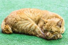 Lazy orange cat Stock Photography