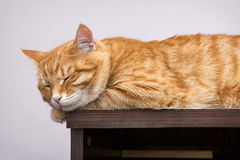 Lazy orange cat Royalty Free Stock Photos