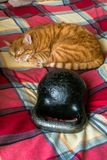 Lazy red cat, curled up and sleeping near the standard 24-kg cast iron kettlebell. Full of serenity the cute red cat likes to curl up and doze on the checkered royalty free stock photography