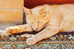 Lazy red cat is sleeping stretched his legs Royalty Free Stock Images