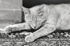 Lazy red cat is sleeping stretched his legs Stock Photos