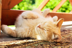 Lazy red cat Royalty Free Stock Photography