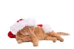 Lazy Santa Cat Royalty Free Stock Images