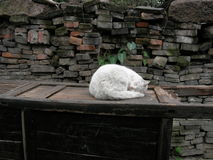 Lazy sleeping cat Royalty Free Stock Images