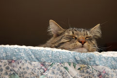 Lazy sleepy cat. A sleeping cat, sleeping on top of a couch Royalty Free Stock Photo