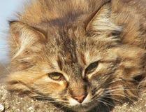 Lazy sleepy ginger cat Stock Image