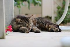 Lazy stray cat Stock Image