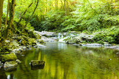 Lazy Stream in Summer. A stream in summer at Smoky Mountain National Park Royalty Free Stock Images