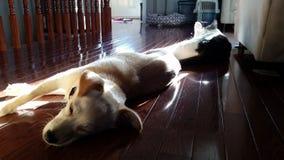 Lazy Sunday sunny naps Royalty Free Stock Photography