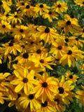 Lazy Susans Garden Stock Photo