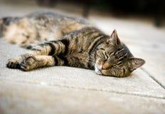 Lazy Tabby Cat Sleeping on Concrete Patio. A striped mature tabby cat sleeps on concrete patio Stock Photos