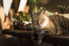 Lazy unhappy cat Stock Photos