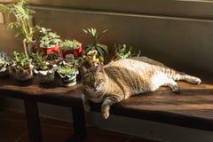 Lazy unhappy cat Stock Photo