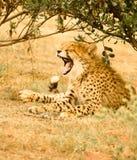 Lazy wildlife Royalty Free Stock Photography