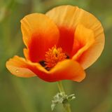lb 02 kwiat Zdjęcia Royalty Free