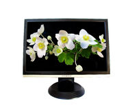 LC monitor and flowers Stock Photography