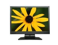 Lcd-Bildschirm mit herrlicher Blume Stockfoto