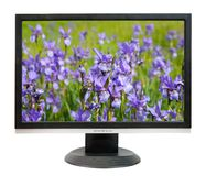 Lcd monitor. With iris flowers. On screen my photo Royalty Free Stock Photography