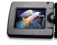 LCD screen. Live view of the digital camera LCD screen Royalty Free Stock Photos