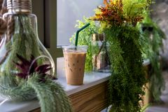 Lce espresso coffee with plant decoration. Lce espresso coffee in plastic glass with fresh green plant decoration on table for relax in cafe. Natural interior at Stock Photography