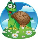 Lächelnde Spaßschildkröte auf einem Farbenhintergrund Stockbilder