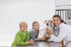 Lächelnder Tierarzt, der einen Hund mit seinen Eigentümern überprüft Stockfotografie