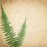 Ld葡萄酒纸与绿色干燥蕨的纹理背景离开 免版税库存图片