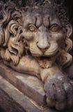 Leão ao redor Imagem de Stock