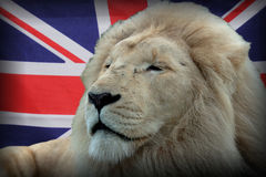 Leão britânico Fotografia de Stock