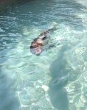 Leão de mar 3 Imagens de Stock